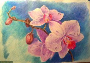 Картинки цветы нарисованные цветные 026