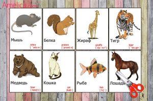 Карточки животные картинки для детей 028