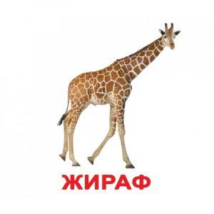 Карточки картинки для детей животные 028