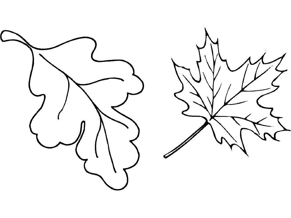 картинка кленового и дубового листа остановить