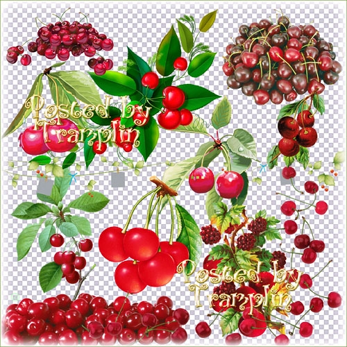 Клипарт на прозрачном фоне ягоды 004