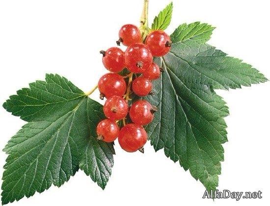 Клипарт на прозрачном фоне ягоды 012