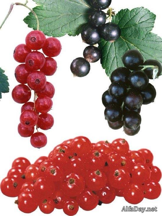 Клипарт на прозрачном фоне ягоды 024