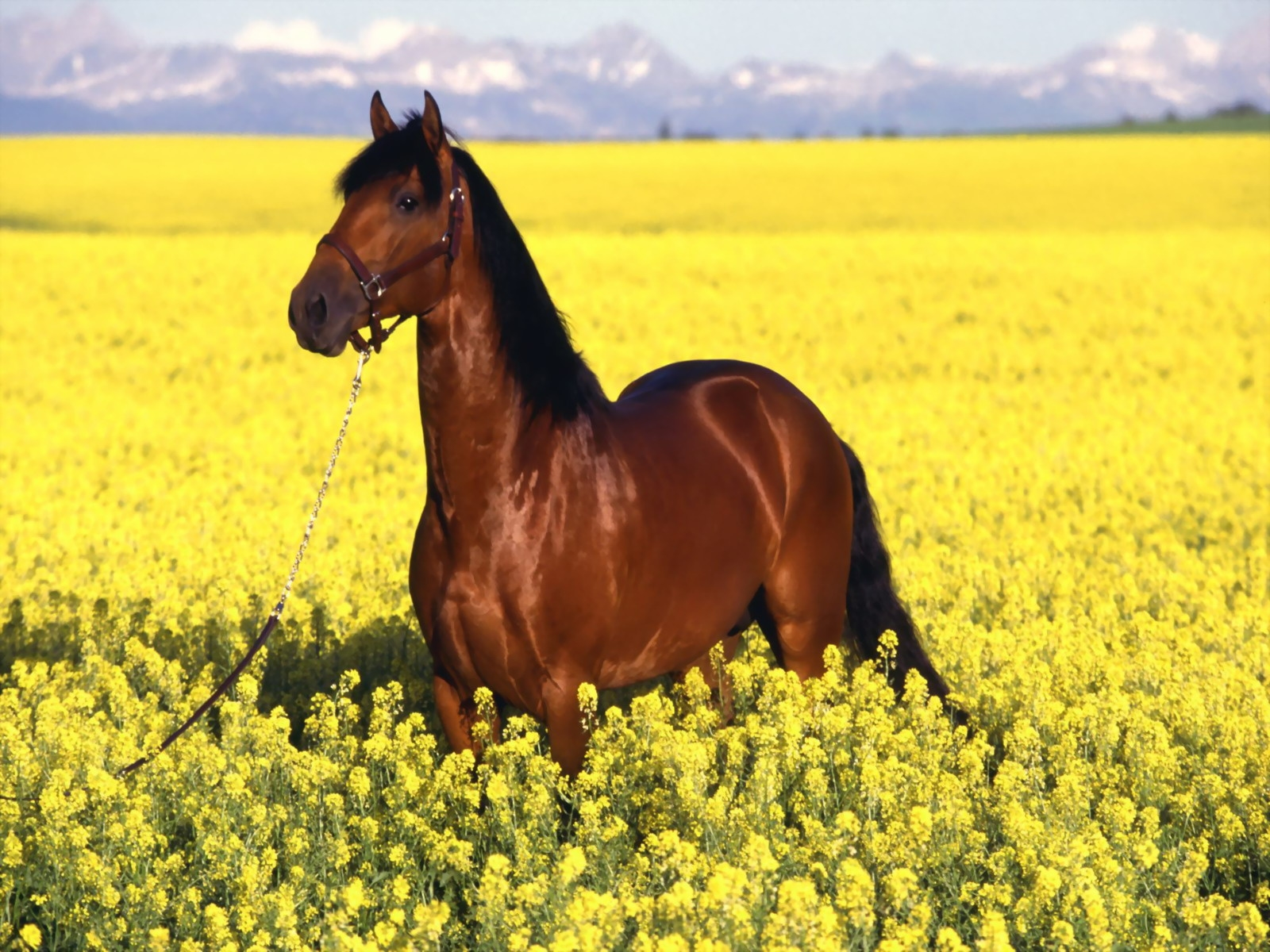 Конь в поле картинки и обои красивые (30)