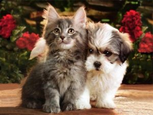 Котенок и щенок фото   подборка 027