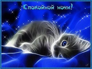 Котенок картинка спокойной ночи   смотреть бесплатно 021