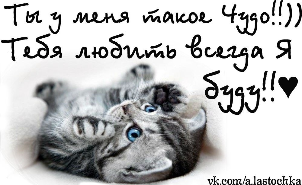 Открытки котенок я люблю тебя, оксана днем