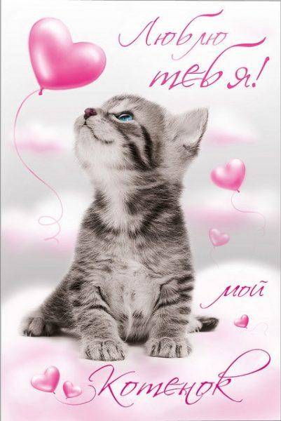 Картинки любимый мой котенок
