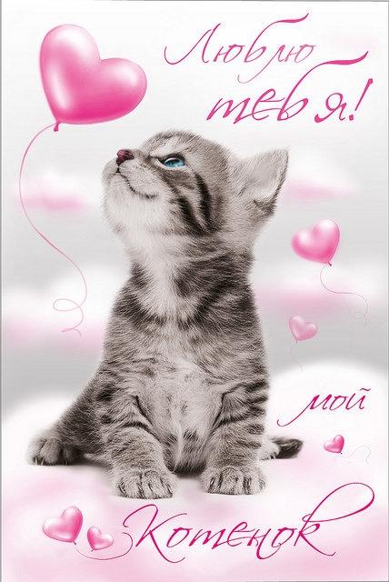 Открытки котик я тебя люблю