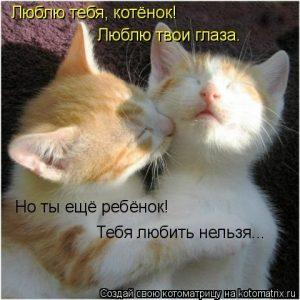 Котенок люблю тебя картинки и открытки 023