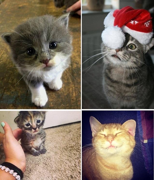 Котики картинки милые обнимашки 002