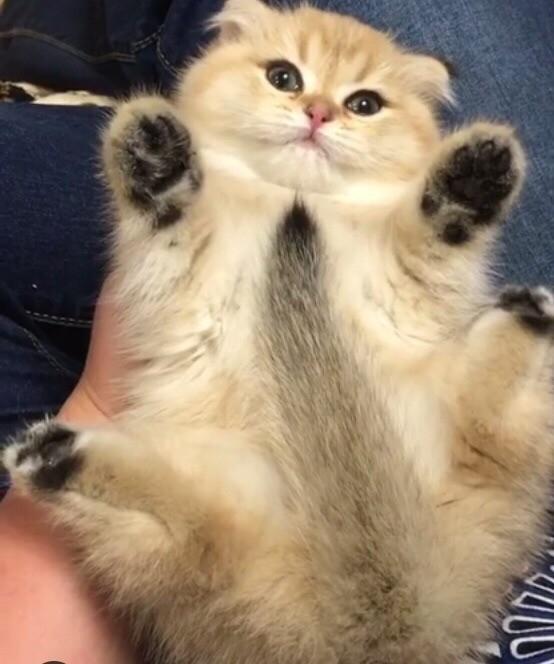 Котики картинки милые обнимашки 007