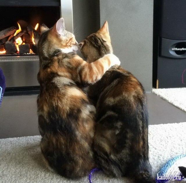 Котики картинки милые обнимашки 009