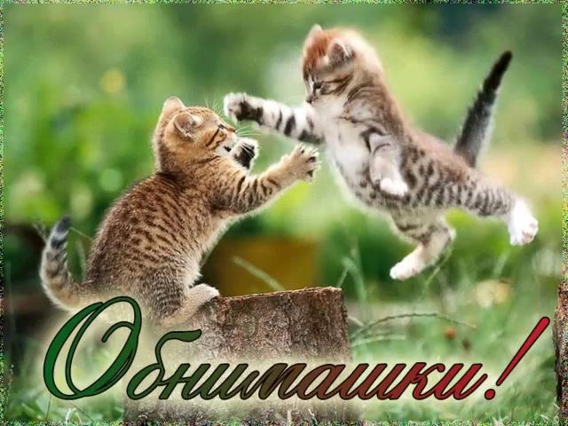 Котики картинки милые обнимашки 014