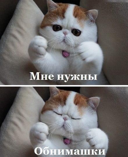 Котики картинки милые обнимашки 015