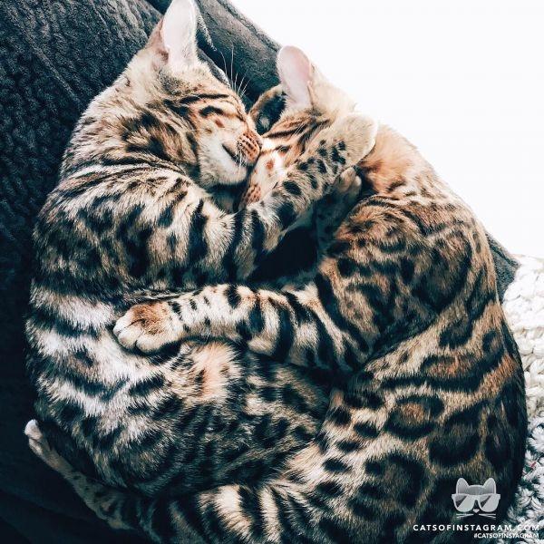 Котики картинки милые обнимашки 016