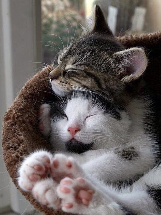 Котики картинки милые обнимашки 018