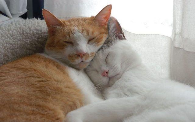 Котики картинки милые обнимашки 022