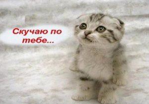 Котик картинки я скучаю   подборка 028