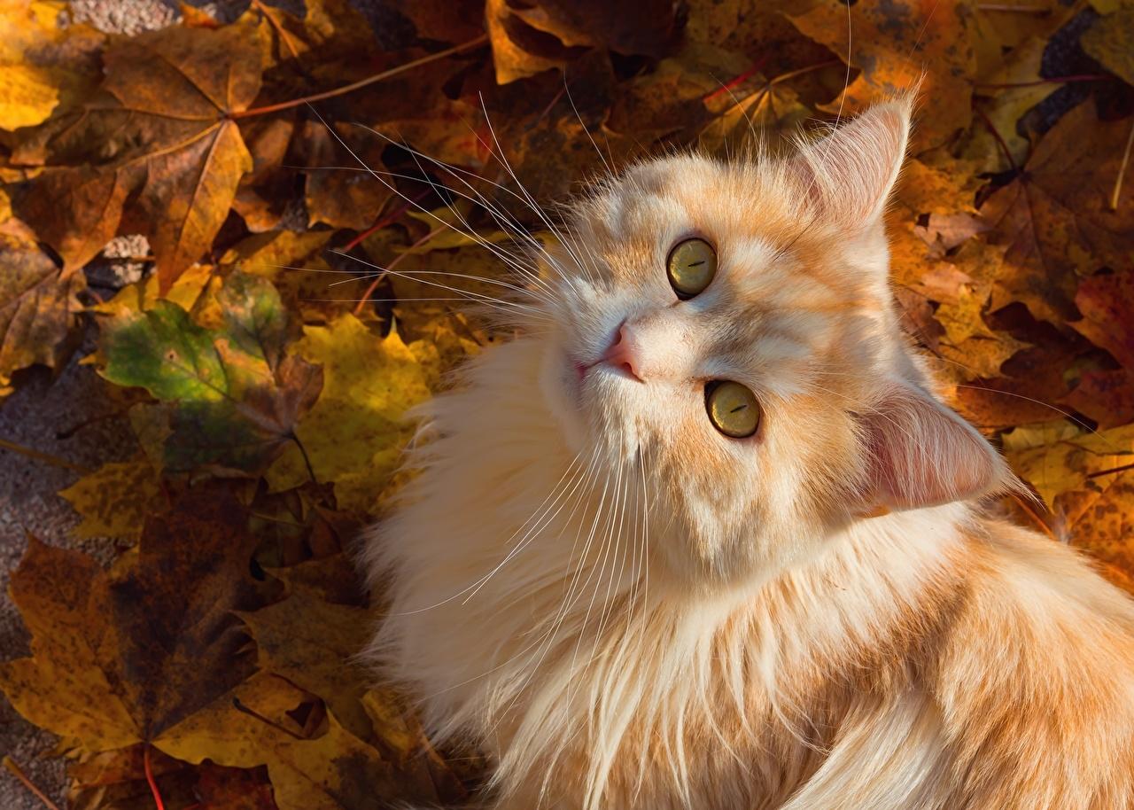 Открытки кота с осени, днем