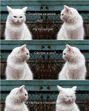 Коты с надписями приколы смешные и веселые 024