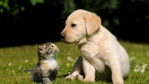 Котята и щенки обои на рабочий стол — подборка019