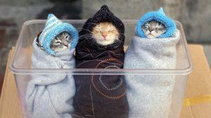 Котята очень красивые картинки   подборка019