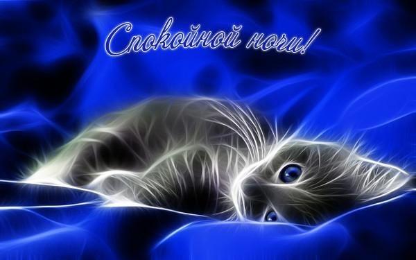 Котята спокойной ночи картинки и открытки (1)