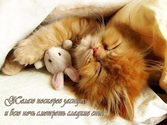 Котята спокойной ночи картинки и открытки (10)