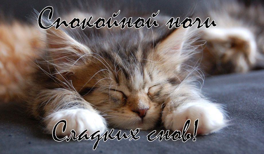 Котята спокойной ночи картинки и открытки (13)