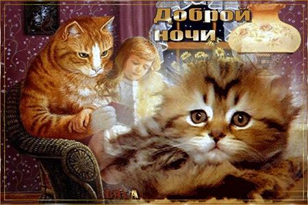 Котята спокойной ночи картинки и открытки (14)