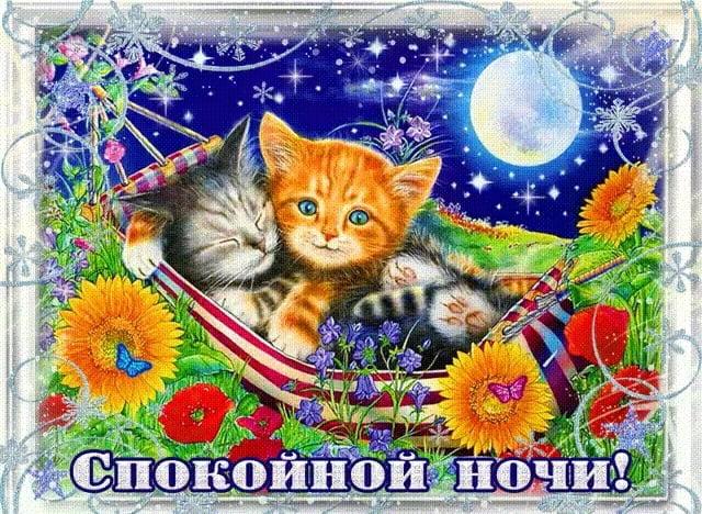 Котята спокойной ночи картинки и открытки (15)