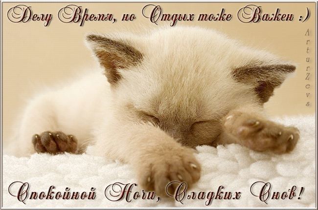 Котята спокойной ночи картинки и открытки (16)