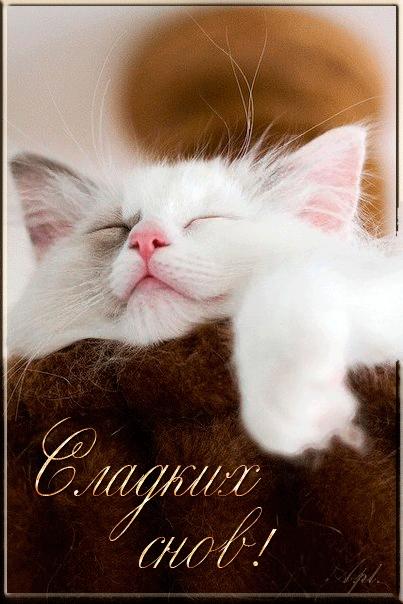 Котята спокойной ночи картинки и открытки (17)