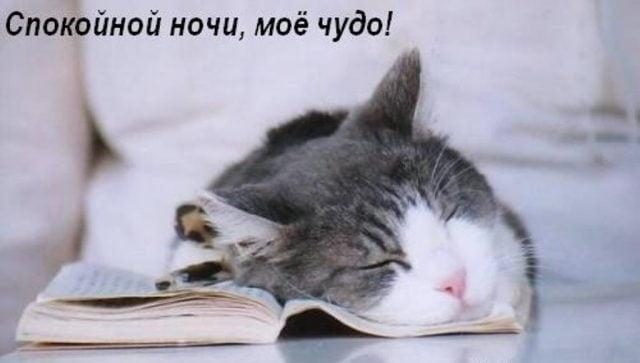 Котята спокойной ночи картинки и открытки (18)