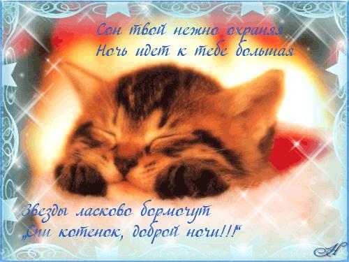 Котята спокойной ночи картинки и открытки (19)