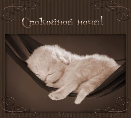 Котята спокойной ночи картинки и открытки (2)