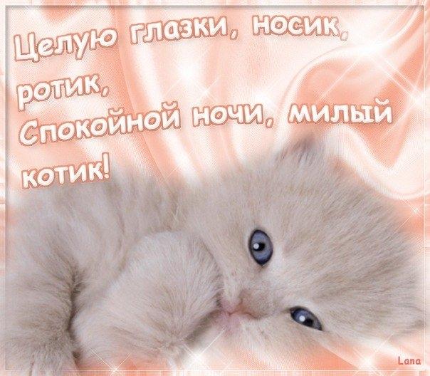Котята спокойной ночи картинки и открытки (20)