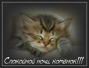 Котята спокойной ночи картинки и открытки (21)