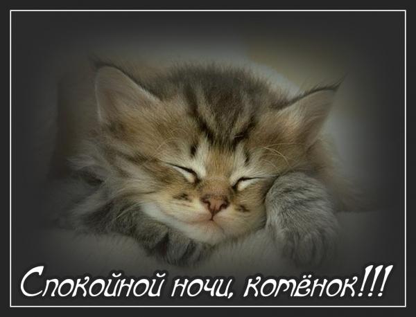 Котику спокойной ночи картинка