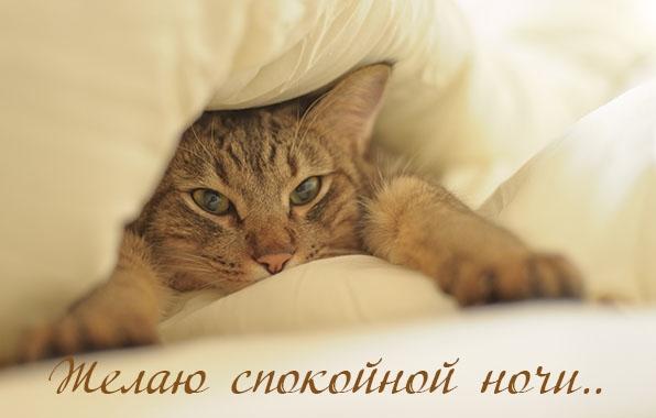 Котята спокойной ночи картинки и открытки (3)