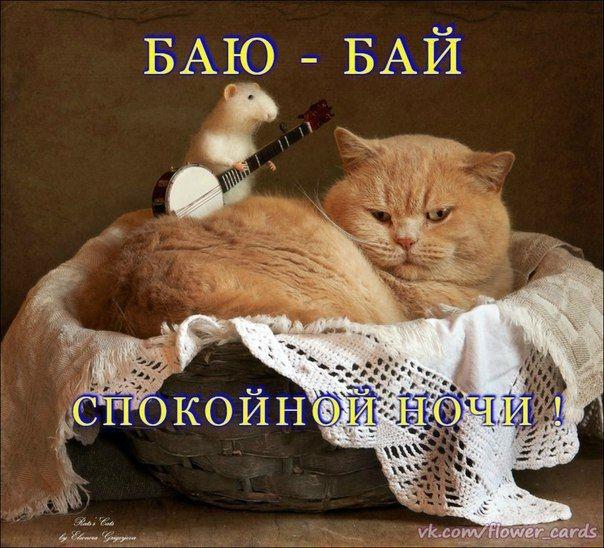 Котята спокойной ночи картинки и открытки (4)