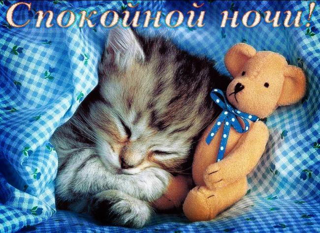 Котята спокойной ночи картинки и открытки (5)