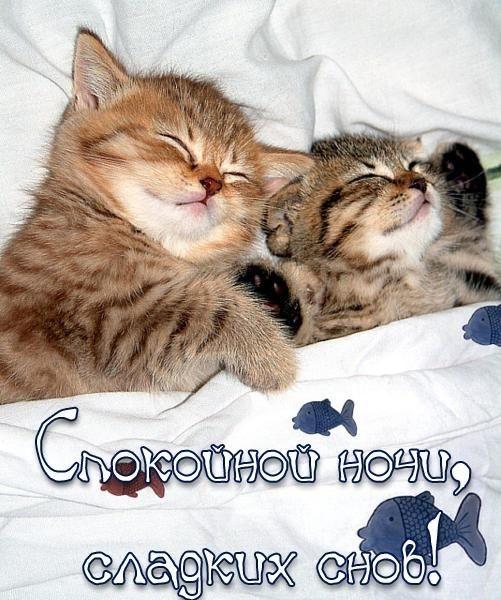 Котята спокойной ночи картинки и открытки (6)