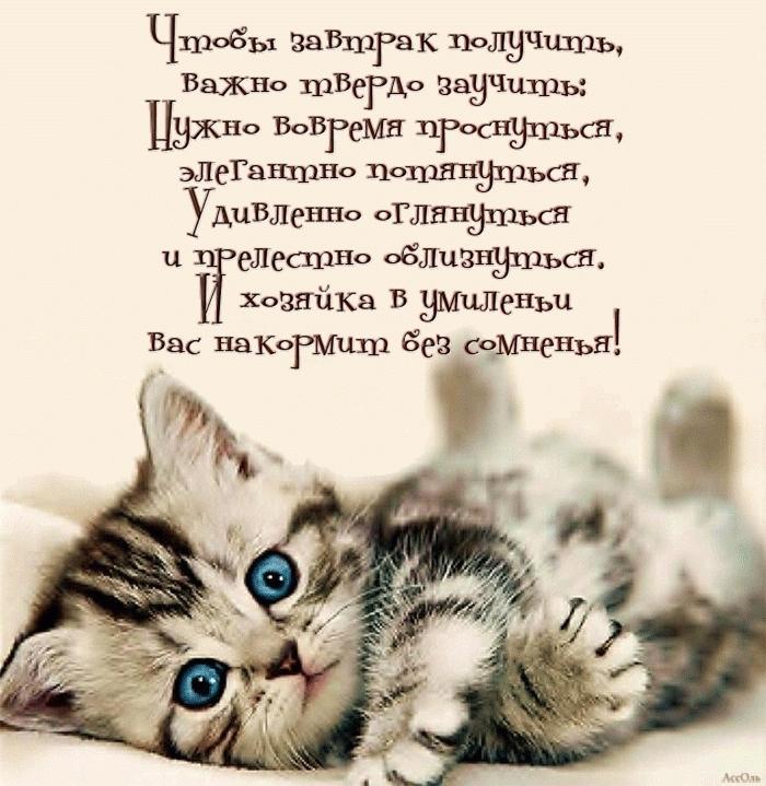 Котята спокойной ночи картинки и открытки (7)