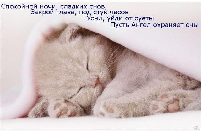 Котята спокойной ночи картинки и открытки (8)