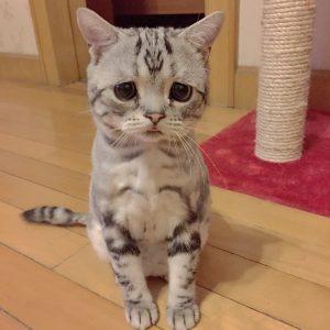 Кот фото с грустными глазами   подборка 029