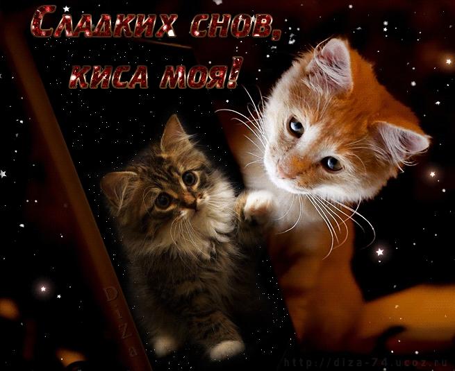 Кошки картинки спокойной ночи   красивые открытки 001