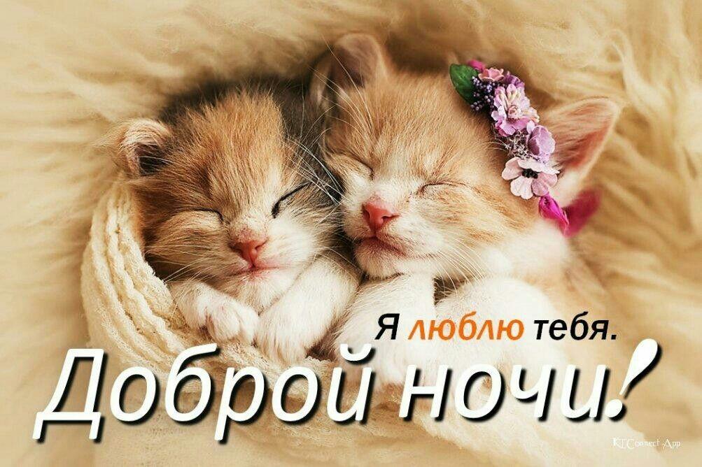 Картинки доброй ночи котенок