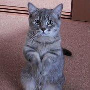 Кошки на аву в вк   красивые фото 018